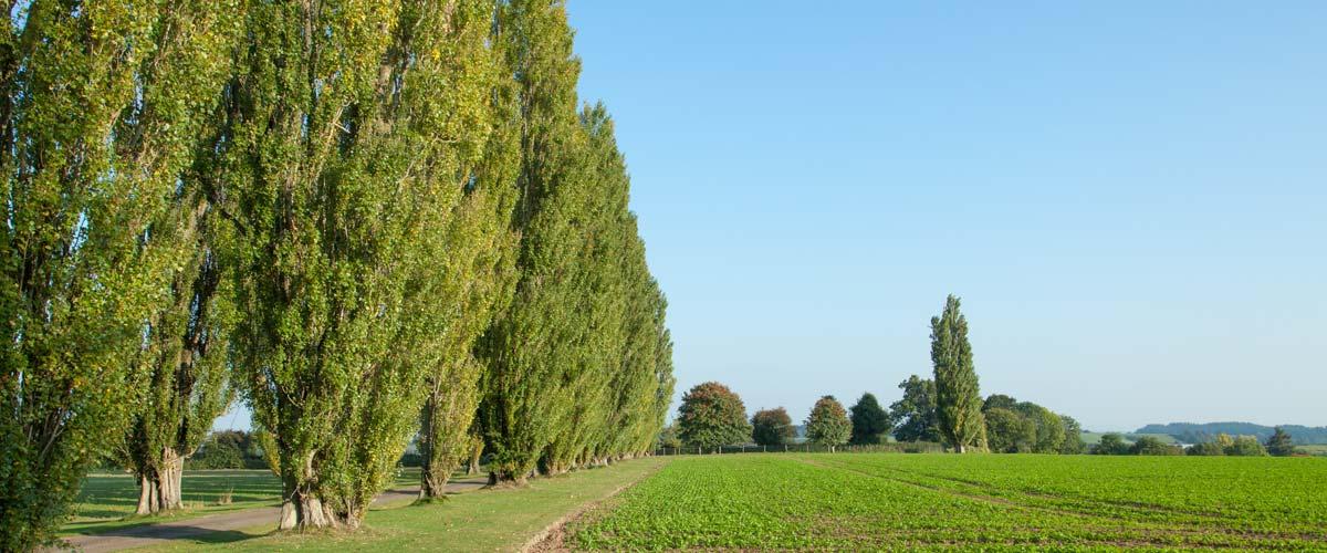 The people who run The Poplars